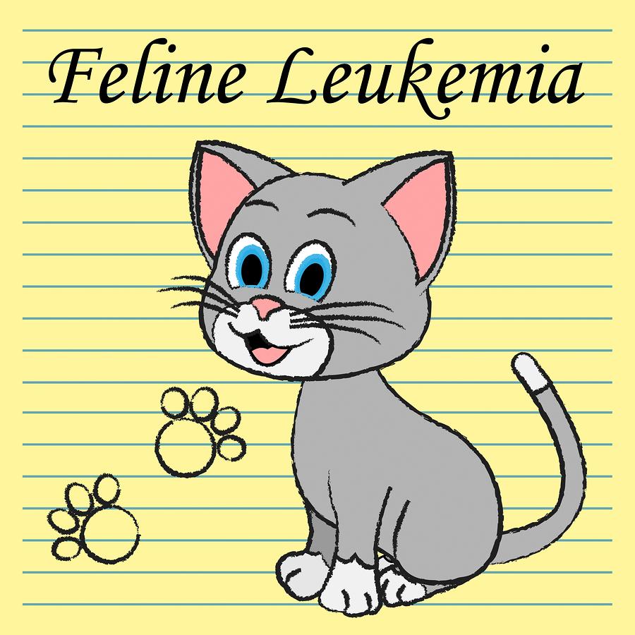 What Is The Feline Leukemia Virus?